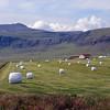Silage cropping south of Verzlunarstaður.