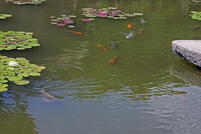 Platt Gardens - Koi Pond