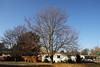 <b>Elm Tree<b>