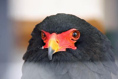 World Center for Birds of Prey - The Peregrine Fund
