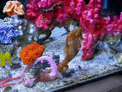 Idaho Aquarium / August 5, 2012