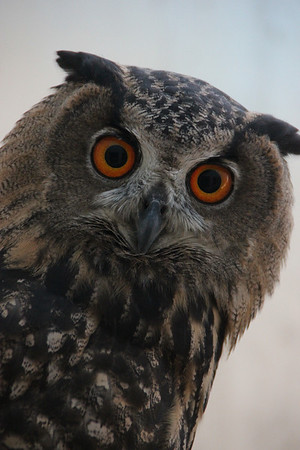 The Peregrine Fund's World Center for Birds of Prey / August 16, 2012