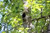 European Starling at Barber Park