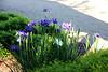 Herbaceous Garden and Iris Collection