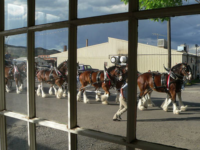 The Clydesdales passed right in front of our house.