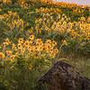 Idaho Wildflowers