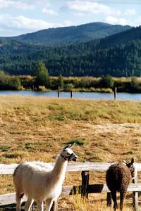 Idaho 1991, 1997, 2010