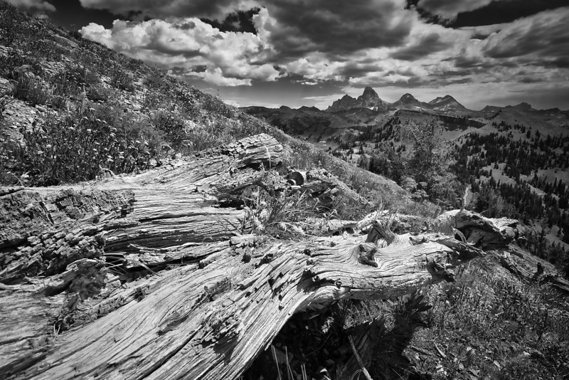Old log pointing to the Grand Tetons