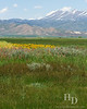Camas prairie near Fairfield Idaho