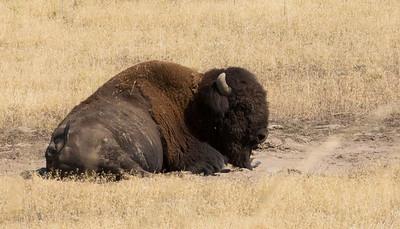 Buffalo  WY maybe 9803