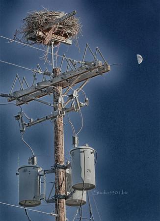 birdsnest & moon 9994 hd