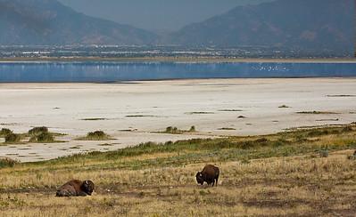 Buffalo water hills WY or UT 9831 803 birds