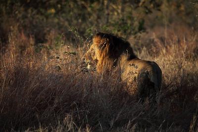 Idube. Kruger Park. Sudafrica