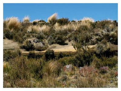 Région du Mt Ruapéhu.  Mt Ruapehu area