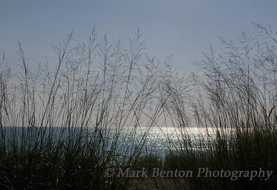 Shoreline Grass Silhouette