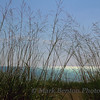 Shoreline Silhouette
