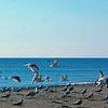 Shorebirds  Liftoff