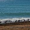 Sea Gulls March