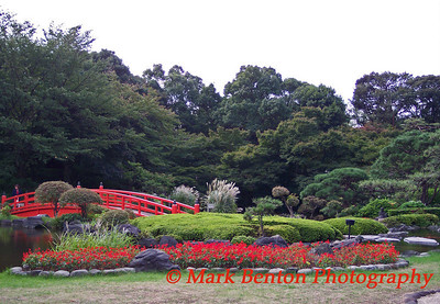 Japanese Red Bridge and Blooms