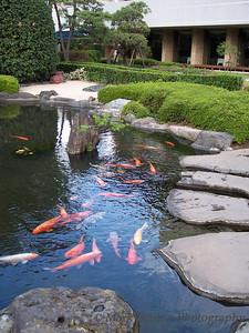 Koi Pond in Tokyo
