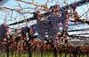 Great Grapes of Mendoza