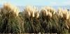 The Lush Landscape of Mendoza