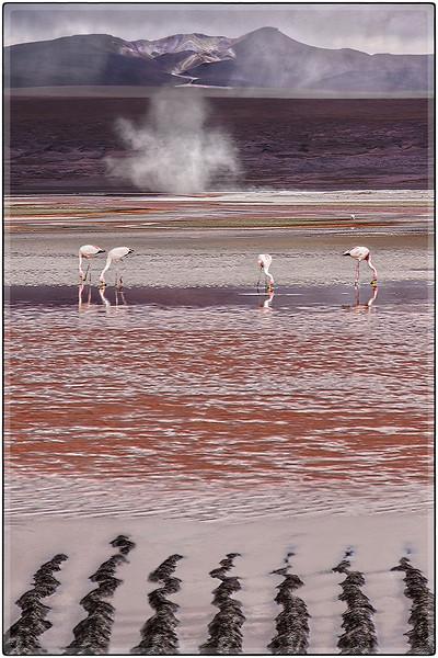 Laguna Colorada II