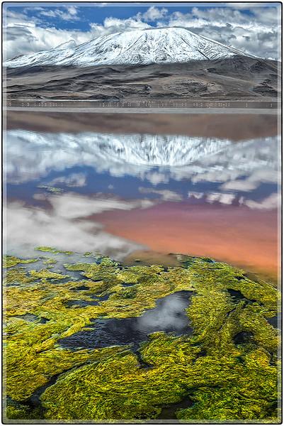 Algas en Laguna Colorada