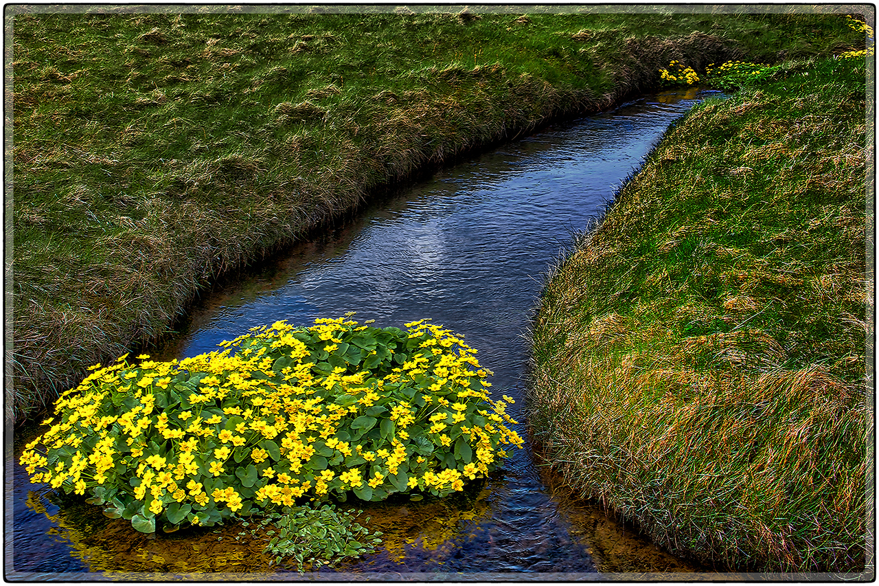 A Ditch Of Flowers