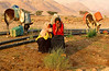 Shy Bedouin Gilrs