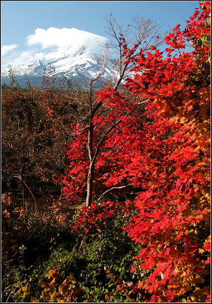 Mt Hood Fall Color
