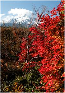 Mt Hood Fall Color