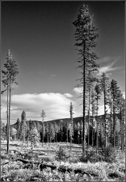 forestIR1