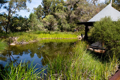 Pond and gazeebo in Kings Park.