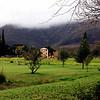 Stellenbosch vinyards