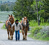 This fellow was leading these two beautiful horses into the parking lot at the Roosevelt Lodge...not sure what he was going to do with them.  Best viewed in the largest sizes.
