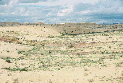 2/19/05 Roadside, north of Hwy 78, west of Imperial Sand Dunes Recreation Area (N. Algodones Dunes)