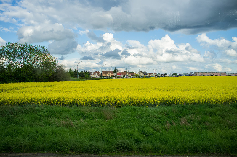 Rape seed in French countryside