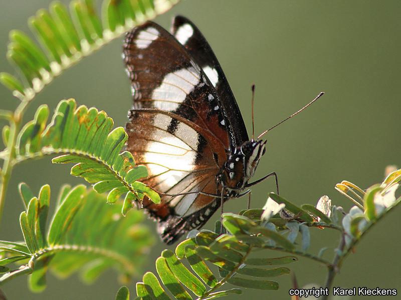 R_128_Bharatpur Keoladeo Ghana Sanctuary