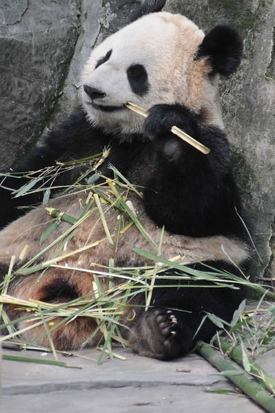 2011, Trip, China,,Chongqing, Zoological Gardens (19)