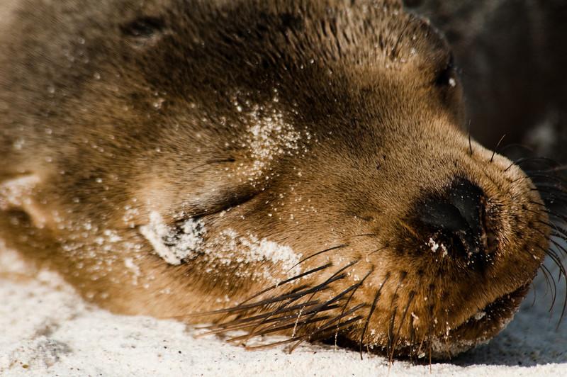 Galapagos Sea Lions-2-2