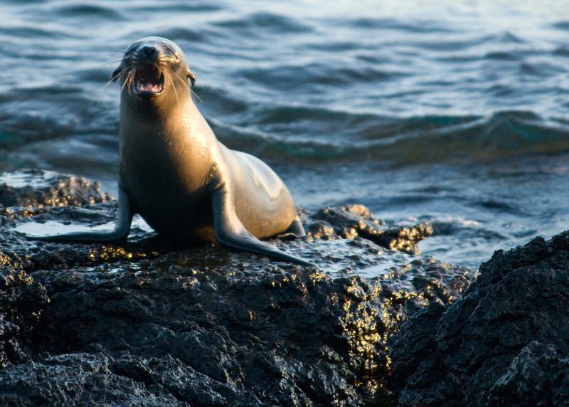 Galapagos Sea Lions-10