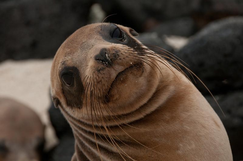 Galapagos Sea Lions-7-2