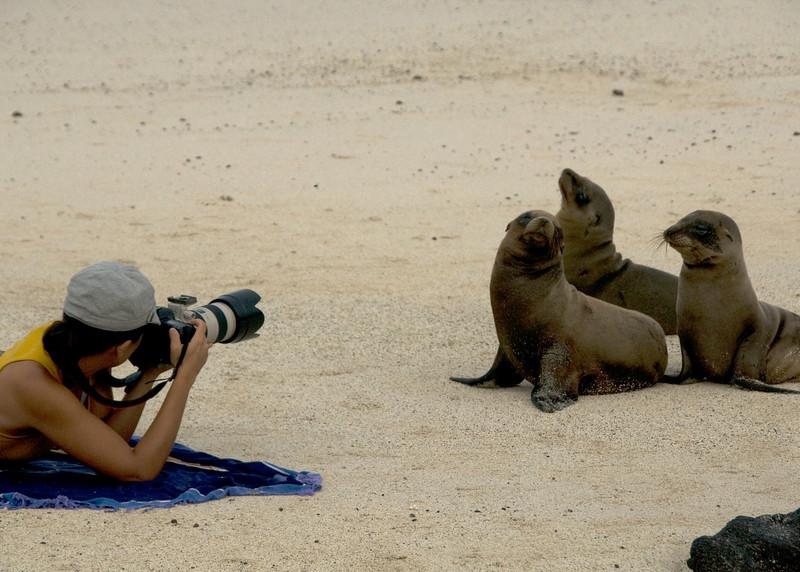 Galapagos Sea Lions-4