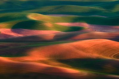 Wheat fields in Eastern Washington Palouse in morning light