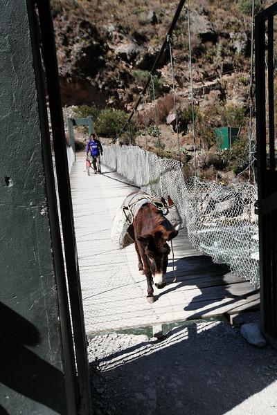 This bridge was directly after the check point which was behind me when I took this photo.  I had to make room for this donkey, especially because it was carrying beer.