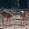 Deer park at Raj Bhavan, Orissa.