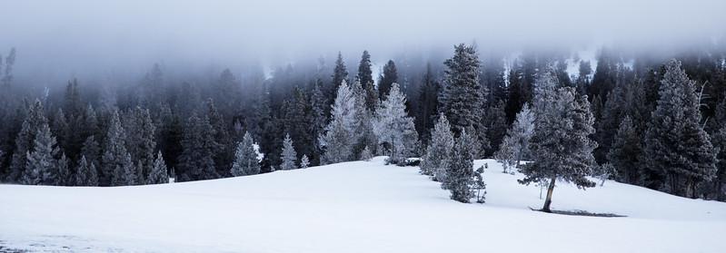 Yellowstone NP 2017