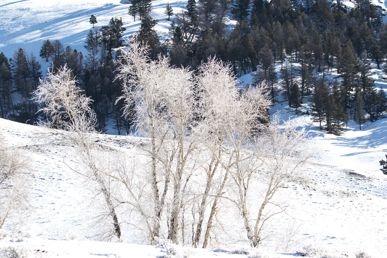 While we didn't have any real snowfall or ice pictures, we did see this  crystalline hoar frost and could enjoy it.