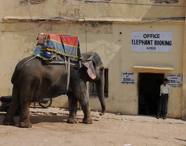 elephantbookingoffice1